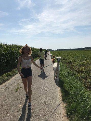 Alpaka-Spaziergang beim Sommerteamevent
